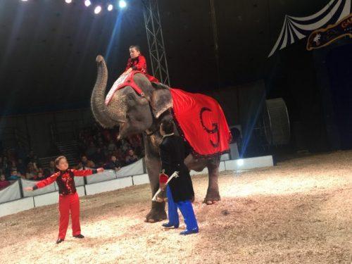 Фоторепортаж: представление «Шоу слонов» цирка братьев Гертнер
