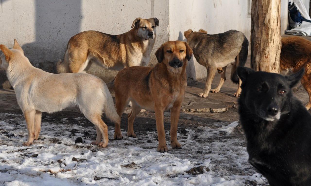 В Новочеркасске до конца месяца отловят большую часть бездомных собак