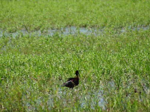 19 февраля в России отмечают День орнитолога