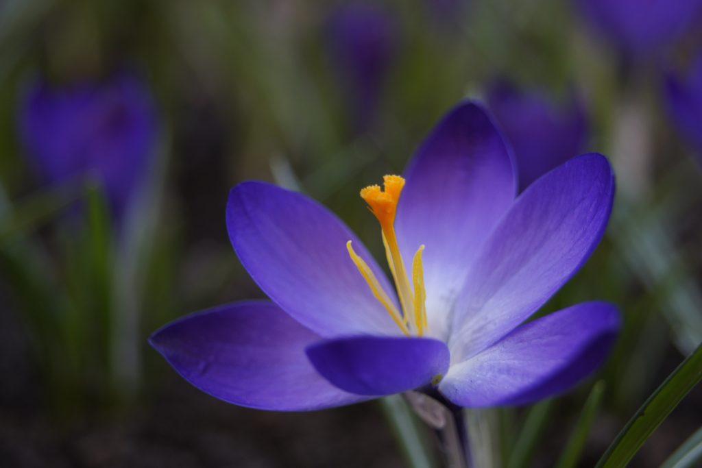 Дарите женщинам цветы! – Что для вас значит 8 Марта?