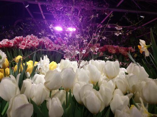 В «Аптекарском огороде» проходит «Репетиция весны» ФОТО