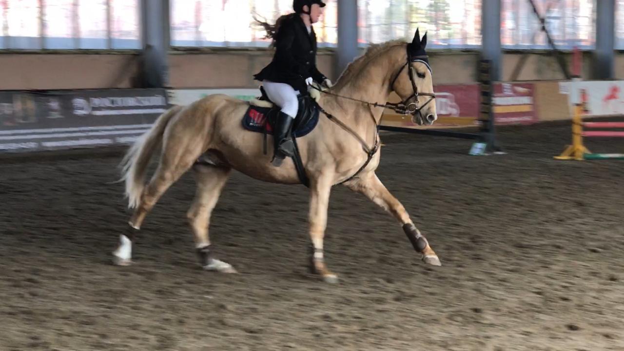 Новочеркасские коневоды успешно выступили на областных соревнованиях