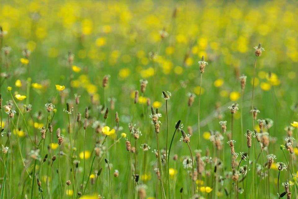 Фестиваль экологического туризма пройдёт 20 апреля в Орловском районе