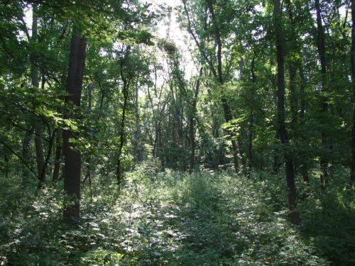 Василий Голубев утвердил Лесной план Ростовской области на 2019-2028 годы