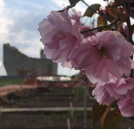 Весна Победы