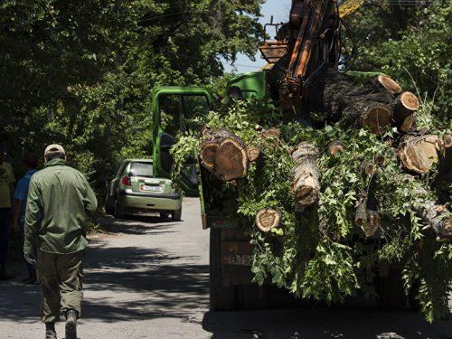 Озеленение Новочеркасска составляет 38 процентов от нормы