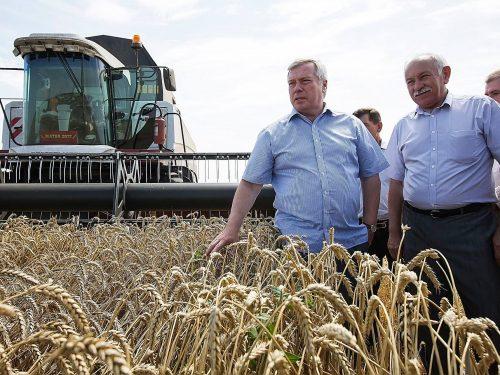 На Дону стартовала жатва-2019