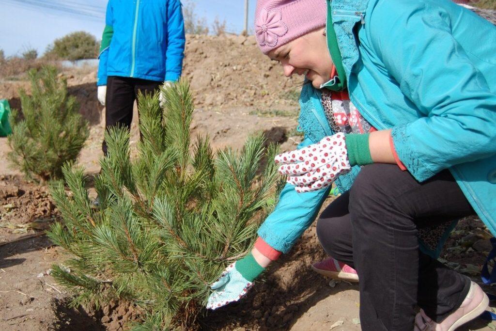 Акция «Живи, лес!» стартует в Ростовской области в первый день нового учебного года