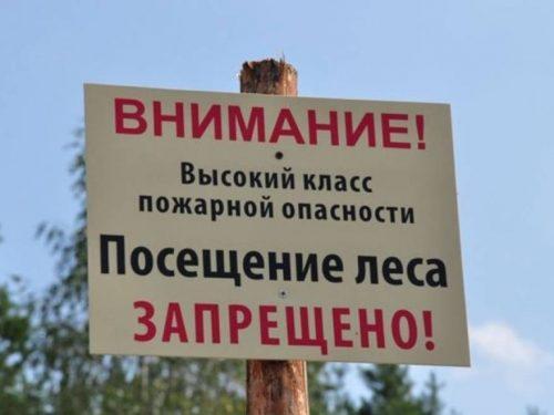 На Дону продлен режим ограничения пребывания граждан в лесах
