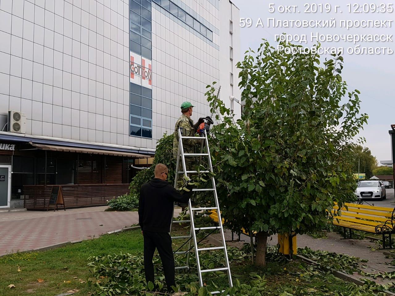 В Новочеркасске коммунальные службы производят опиловку аварийных веток на деревьях и постригают кусты
