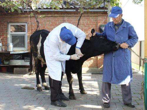 Ветеринарные обработки — в помощь сельскому хозяйству Дона