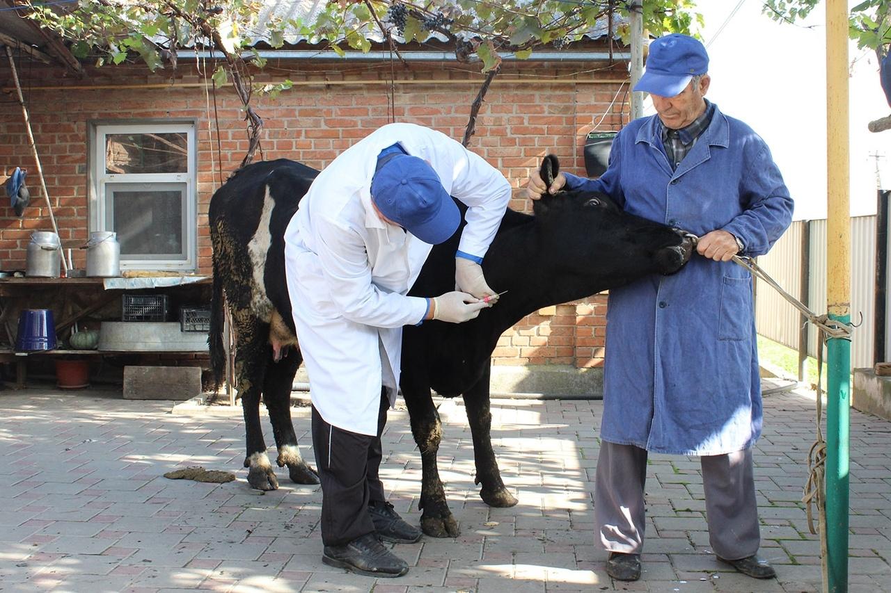 Ветеринарные обработки – в помощь сельскому хозяйству Дона