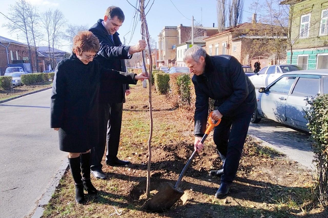 Народные избранники высадили деревья на улице Просвещения