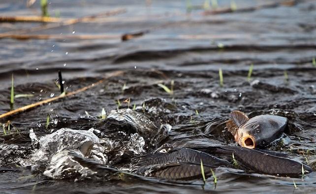 Низкий уровень воды в реке Дон создаст проблемы для нереста рыбы