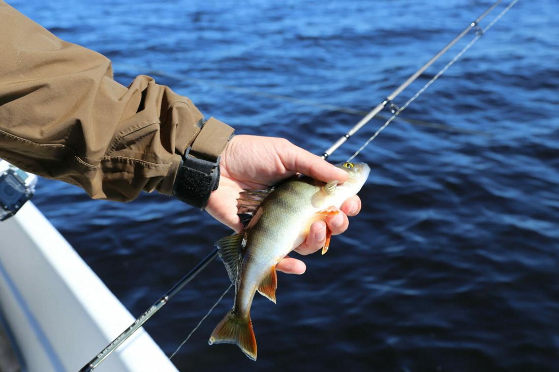 Ростовская межрайонная природоохранная прокуратура сообщает о вступлении в силу новых Правил рыболовства