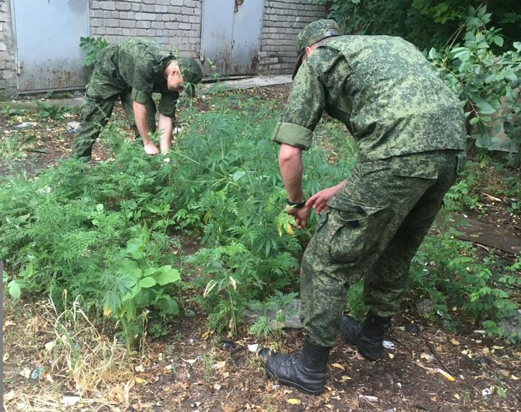 В Новочеркасске продолжается уничтожение очагов дикорастущей конопли