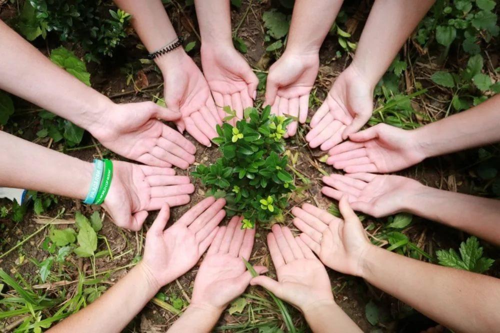 На Дону стартовал конкурс проектов по экологии среди волонтеров