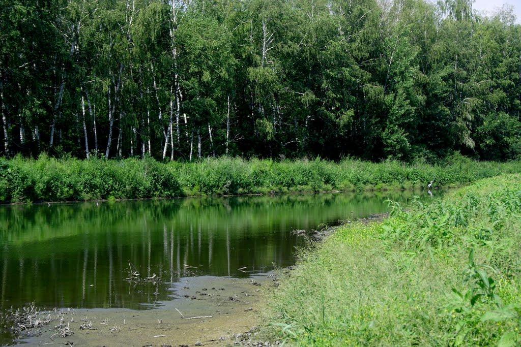 На Дону запрещено ходить в леса до августа
