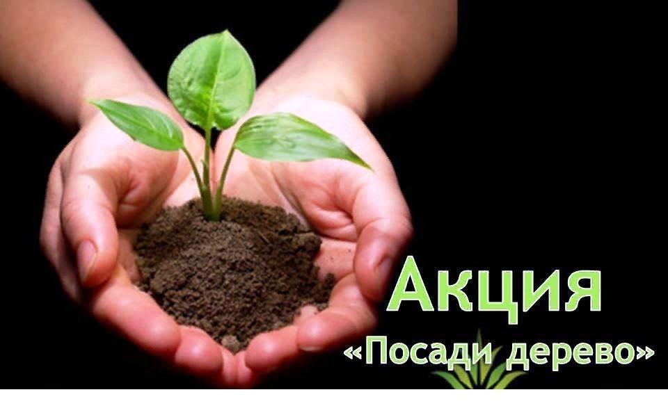 Добрая эко-акция прошла в казачьей столице
