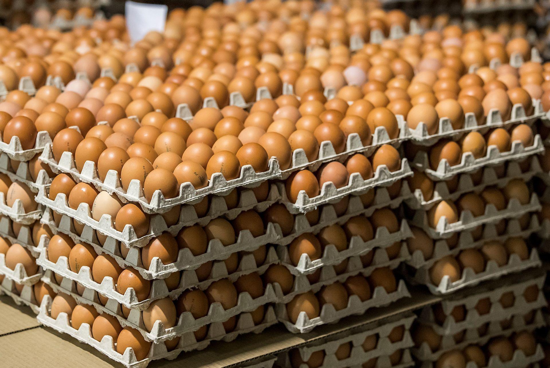 В России ожидают снижения цен на яйца и птицу в апреле-мае