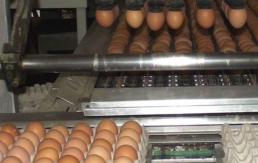 Две крупные птицефабрики возобновляют деятельность в Ростовской области